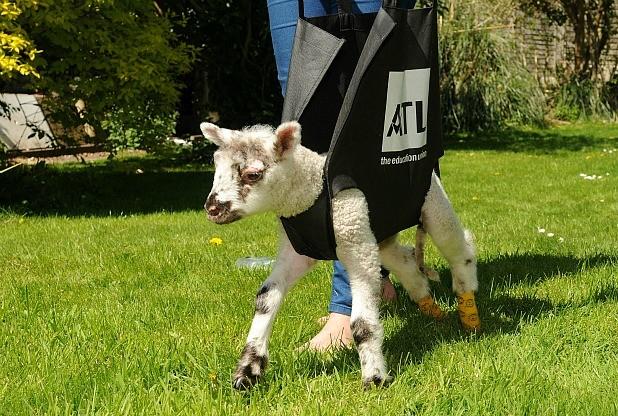 Bouncer Going for Walk