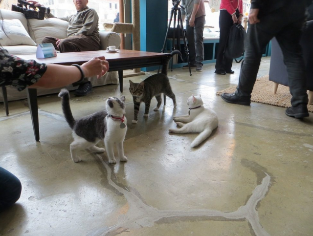 Cats playing in the coffee shop