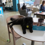 PurinaOne Opens First Pop Up Cat Cafe In New York City Featuring Adoptable Cats From North Shore Animal League