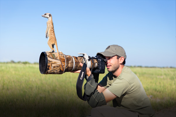 Meerkats And Photographer