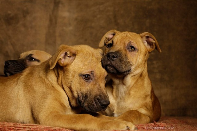 Rescue Me - Canine Buddies