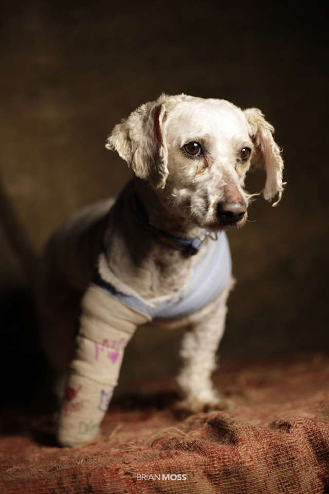 Rescue Me - Puppy With Cast