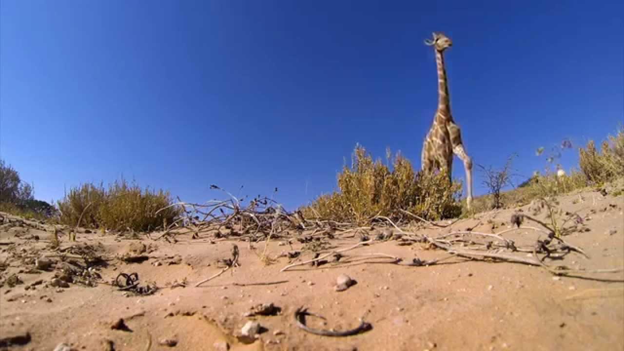 Giraffe Kicks Over Camera And Reveals A Side Rarely Seen