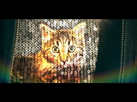 Hapless Magician Randomly Conjures Up (Adoptable) Kitties in 'MagiCATastrophes'