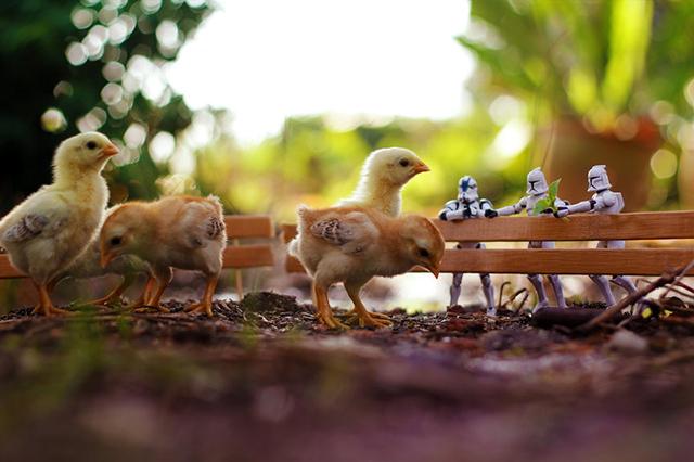 Photos of Miniature 'Star Wars' Action Figures Embarking in All Sorts of Fun Adventures