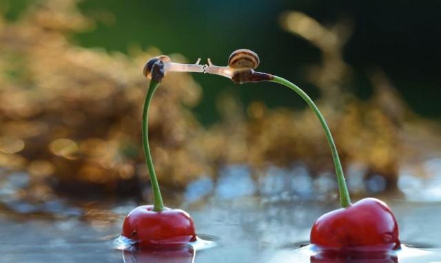 Adorable Fairy Tale Snail Photos by Vyacheslav Mishchenko