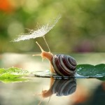 Adorable Fairy Tale Photos of Snails in Nature