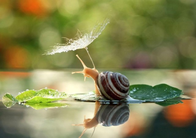 Adorable Fairy Tale Snail Photos by Vyacheslav Mishchenko