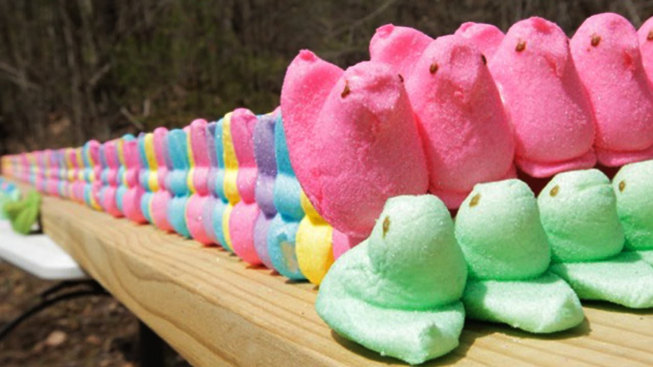 Marshmallow Peeps, Eggs, and Chocolate Bunnies Destroyed by a .50 ...