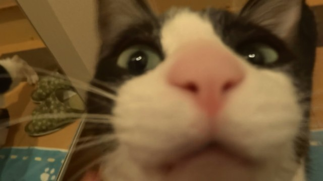 Moo the Cat Excitedly Welcomes Her Human Home After Three Days Away