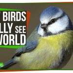 SciShow Explains How Birds Really See the World