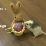 Trained Mice Prepare an Easter Egg Hunt For a Dog Whose Job It Is To Find the Hidden Eggs