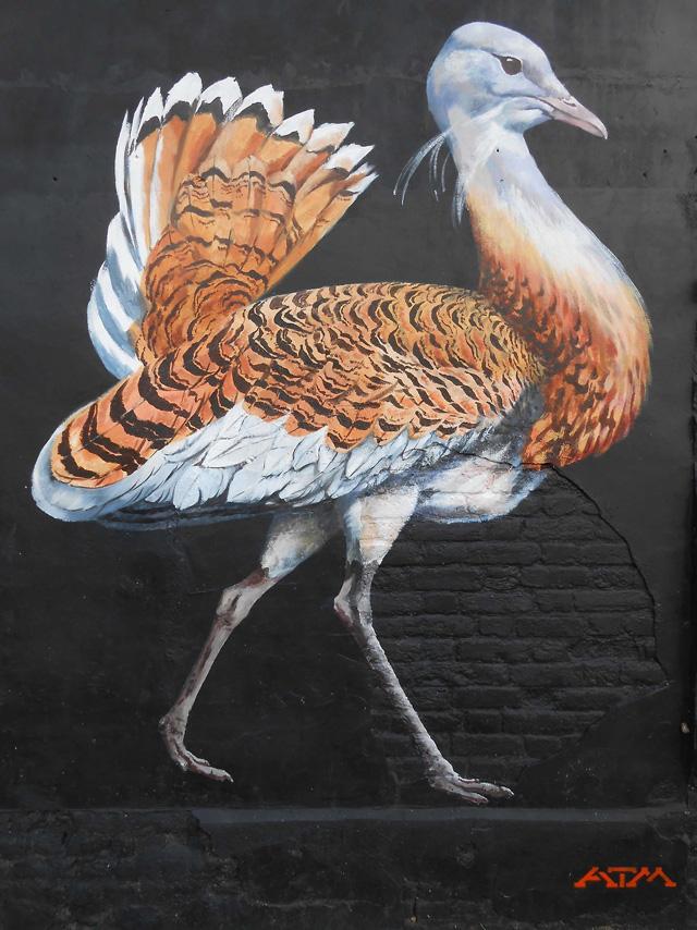 Endangered Birds of Britain