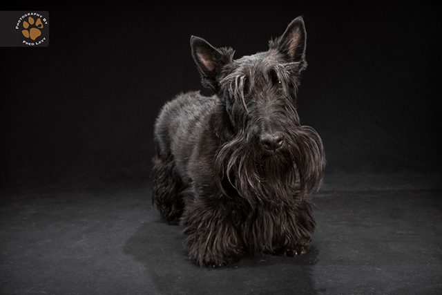 black dog project