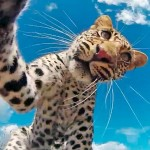 Video of a Leopard and Cub Playing With and Picking Up a GoPro Camera