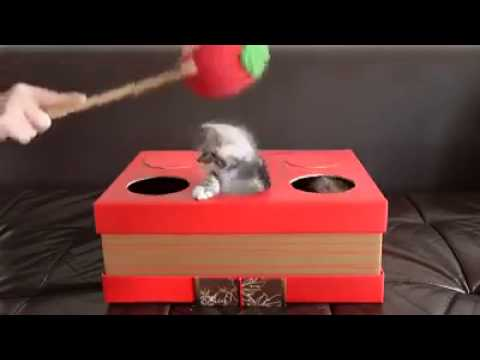 Playing Whac-A-Mole With Kittens