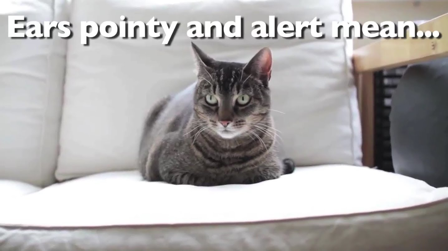 What Your Cat's Body Language is Really Saying by Pleated-Jeans