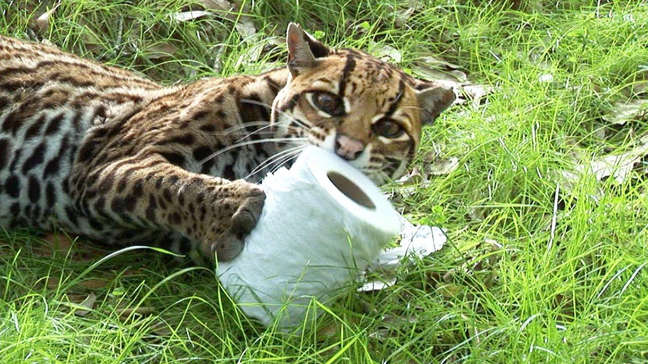 natures miracle cat urine