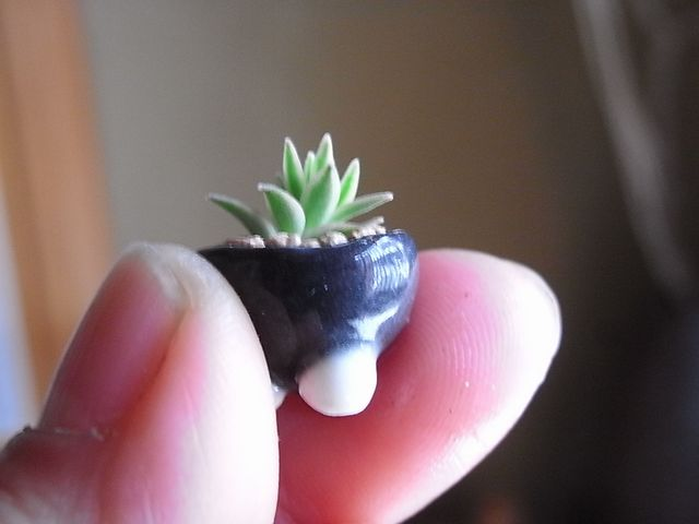 Tiny Bonsai