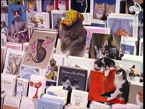 1965 News Report On Dorothy Silkstone's Cat Accessories Shop in Bedford, England