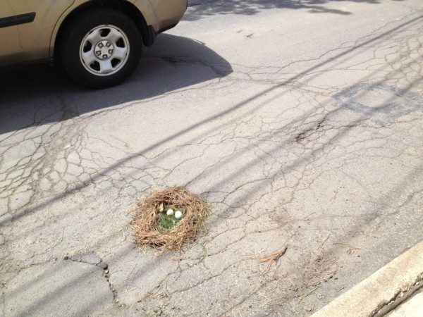Pothole Photo Contest