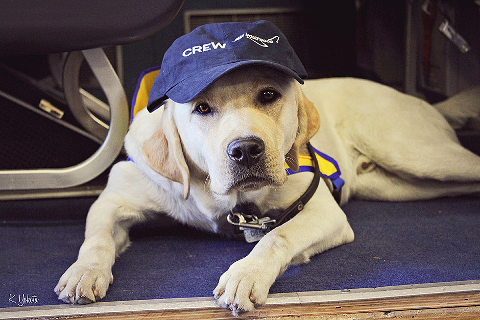 Aviation Soundstage Air Hollywood Offers Classes To Help Services Dogs Conquer Their Fear of Flying