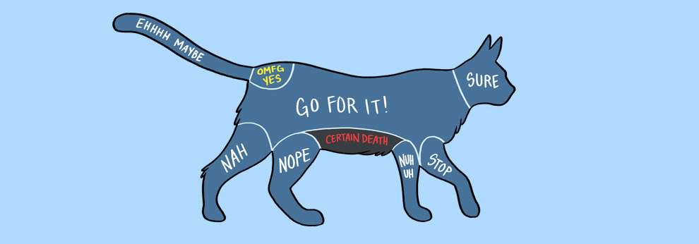 Cat Petting Guide
