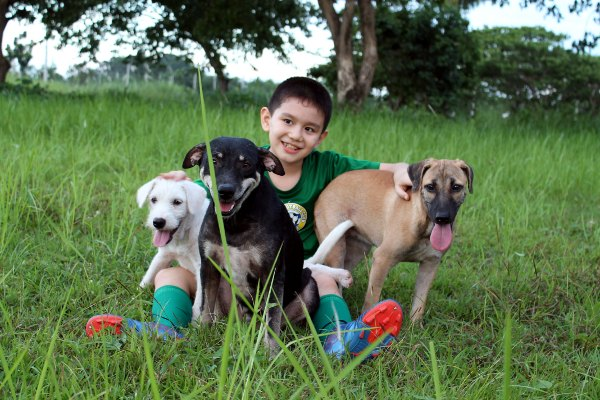 Park Dogs