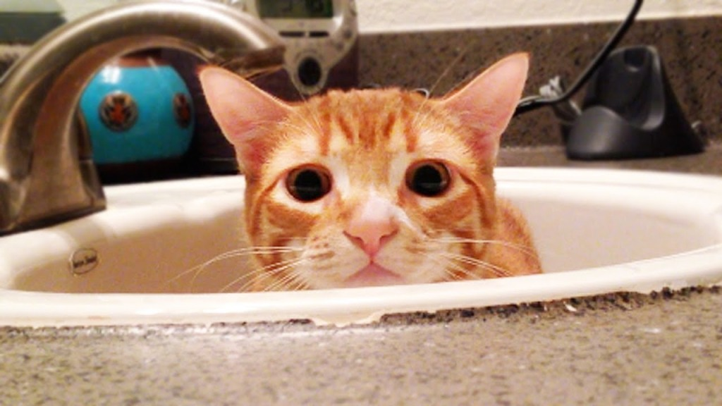 A Cat's Guide To the Many Uses of The Bathroom