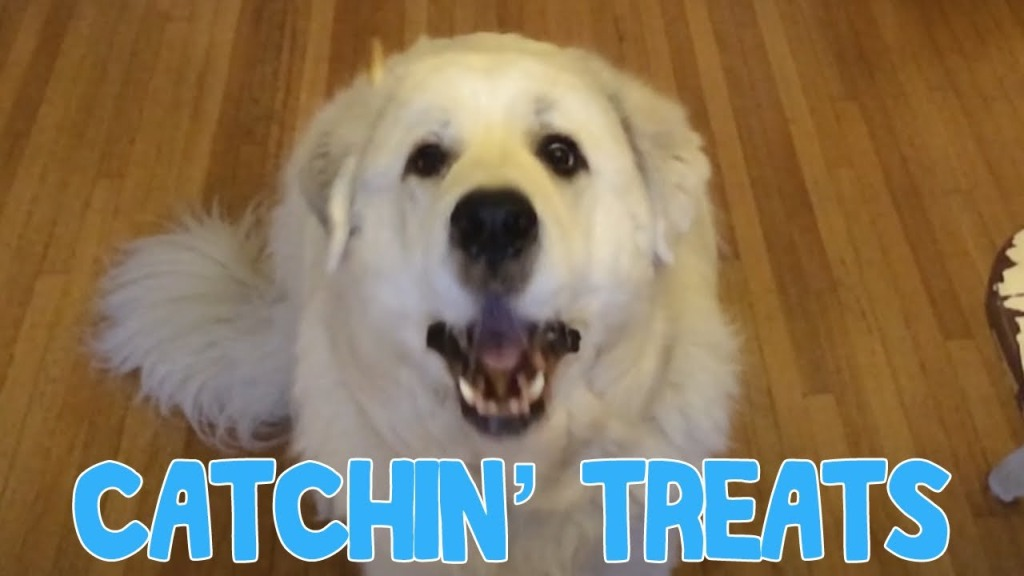 Big White Dog Has Difficulty Catching Treats In Mid-Air