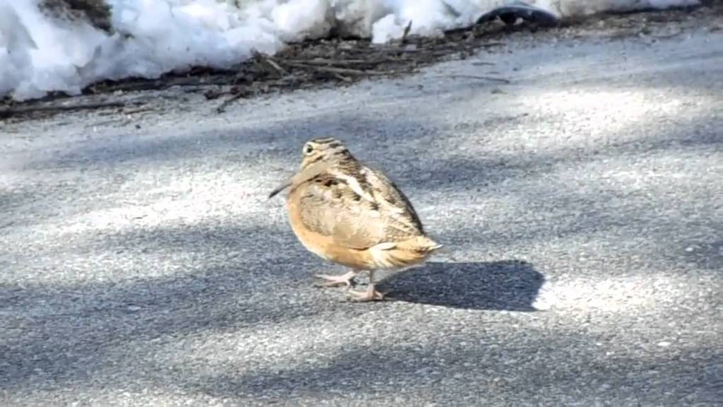 Little Bird In the Street Dances In Perfect Time To the Daft Punk Song 'Something About Us'