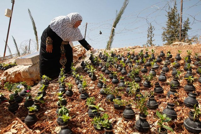 Palestinian Woman Plants Tear Gas Canister Flower Garden
