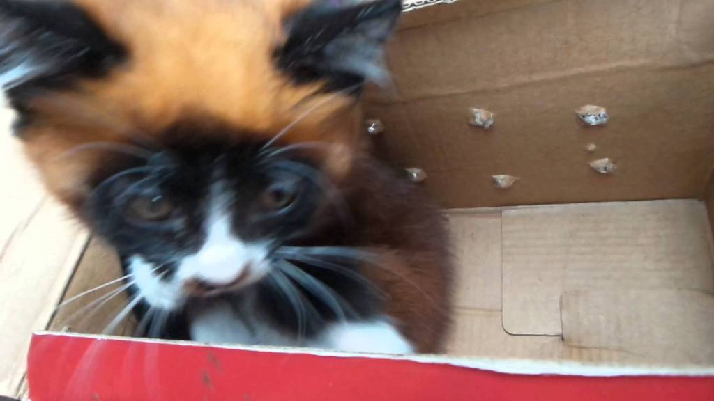 Unusual Little Kitten Strongly Resembles A Red Panda