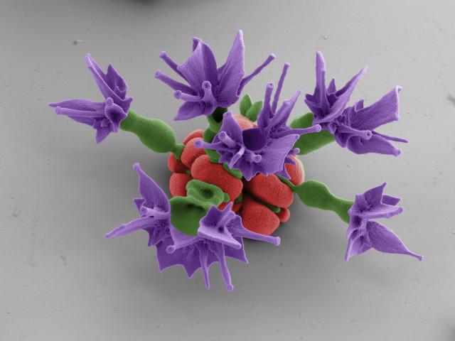 Nano Flowers