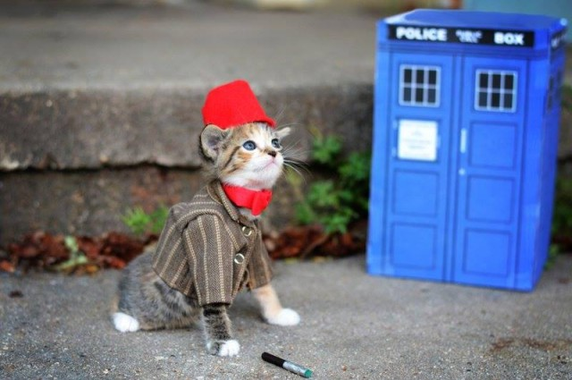 Doctor Who Kittie