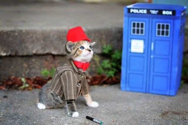 Doctor Who Kittie
