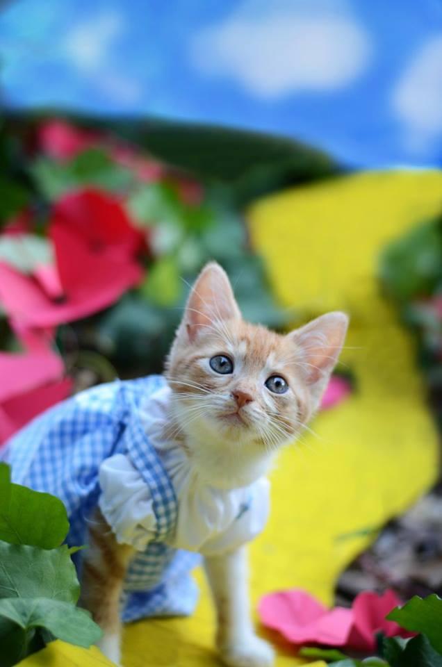 Dorothy - Yellow Brick Road