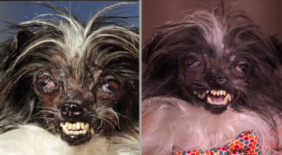 Peanut Before and After