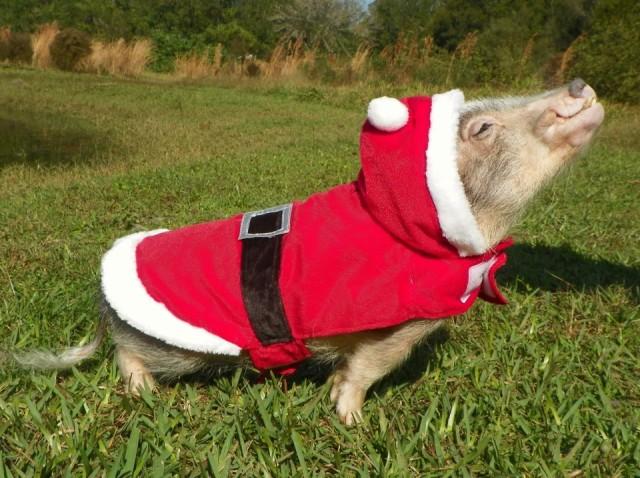 Thimble as Santa