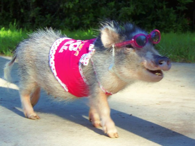 Thimble in Pink Costume