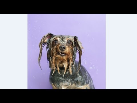 A Behind the Scenes Look at Sophie Gamand's 'Wet Dog' Photo Shoot