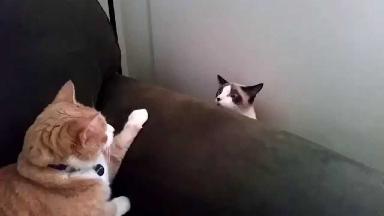 Cat Slowly Rises Up From Behind Sofa to Say Hello and Sinks Back Down When Rejected