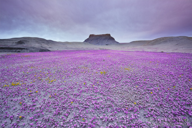 Stunning Photos of Rare Wildflower Blooms in the Deserts of the American West