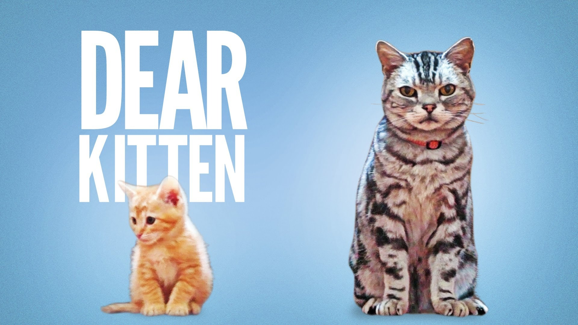 Dear Kitten, A Cute Friskies Ad Narrated by Ze Frank About an Adult Cat Welcoming a New Kitten to His Home