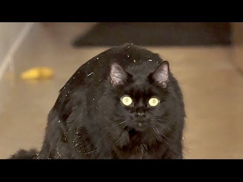Shorty the Cat Shares Her Battle With Addiction As A Warning To Others