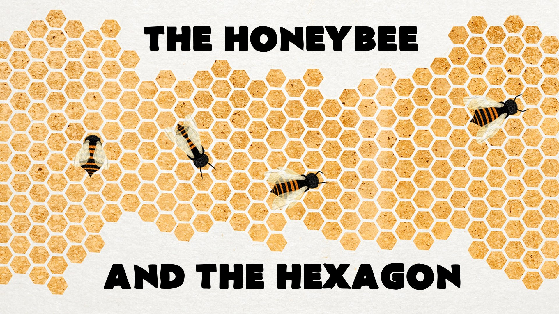 the honeybee and the hexagon a teded animation about