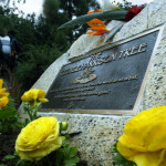 Beetles Kill Los Angeles Pine Tree Memorial to Beatle George Harrison