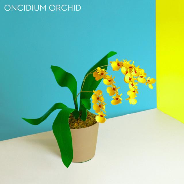 Paper Plants by Art We Heart