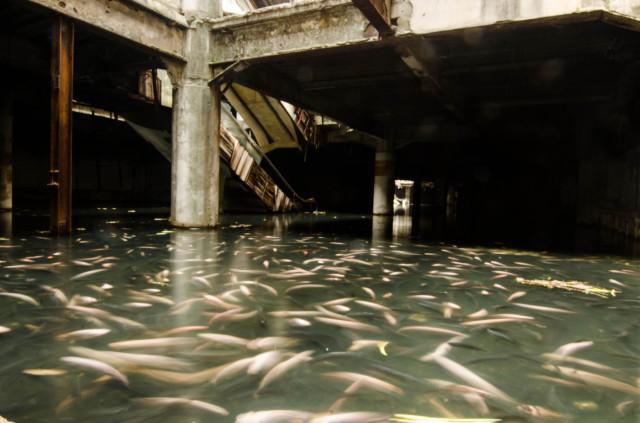Flooded Bangkok Shopping Mall Is Full of Fish