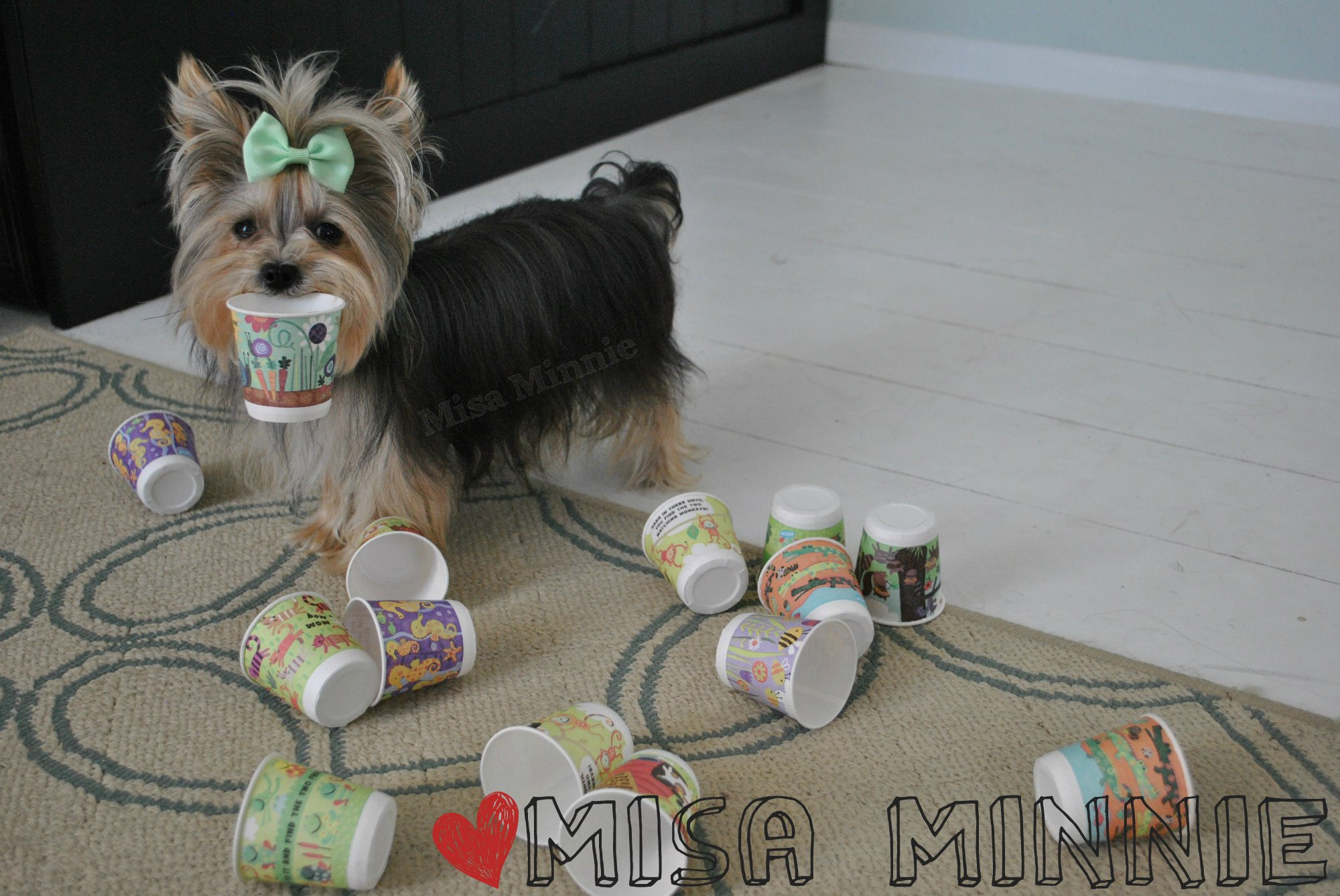 Tiny Bespectacled Yorkie Performs an Amazing Multitude of Wonderful Tricks